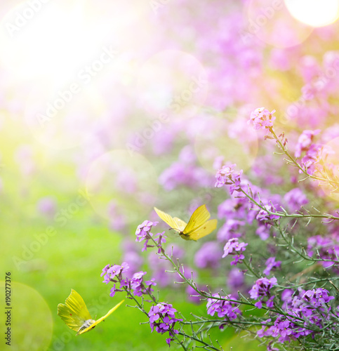 Fotobehang Vlinder abstract spring Background; spring flower and butterfly