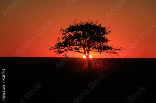 Fotobehang Rood traf. Tree A Glow