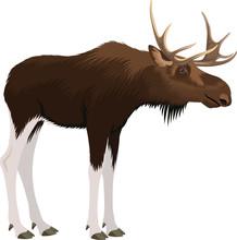 Moose Bull Sticker