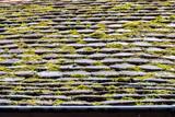 Moos auf Dach - 190303722