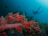 Scuba diver silhouette and coral reef - 190334733