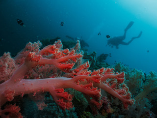 Scuba diver silhouette and coral reef