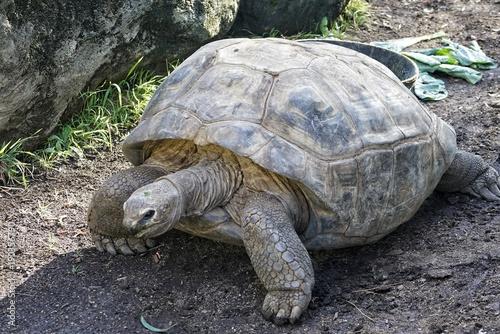 Aluminium Schildpad zoo