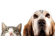 Dog and kitten on white background