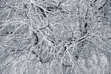 Winter branchs covered with snow - 190375121