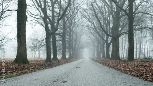 Misty alley in winter forest. Low angle view.