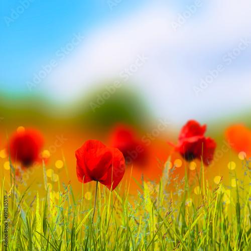 Foto op Plexiglas Klaprozen leuchtende mohnblumen