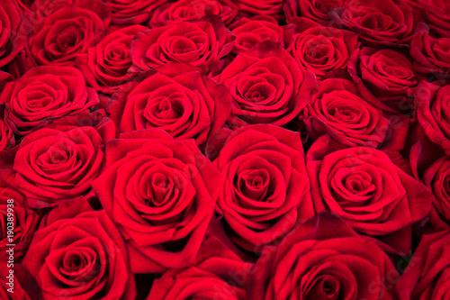 Fototapeta Strauß Rote Rosen als Hintergrund Textur