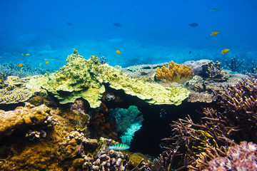 Tropical corals on reef in Indian ocean. Underwater life