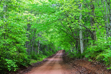 Clay dirt road through rural Prince Edward Island, Canada.
