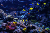 tropical Fish on a coral reef. Underwater coral fish - 190418768
