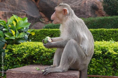 Fotobehang Aap Макака на ступенях древнего индуистского храма