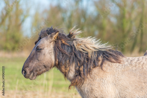 Feral horse in a natural park in winter