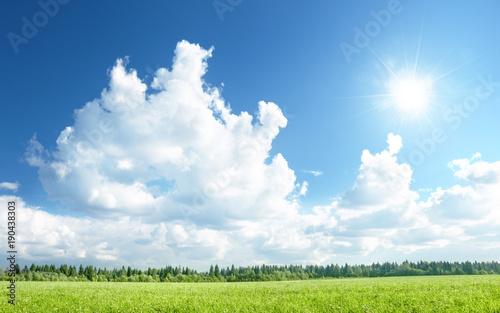 Fotobehang Hoogte schaal field of grass and perfect sky