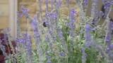 Handheld shot of honey bee flying over flowers in garden - 190448961