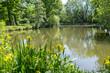 Leinwanddruck Bild - Sumpf-Schwertlilie (Iris pseudacorus) an einem Teich