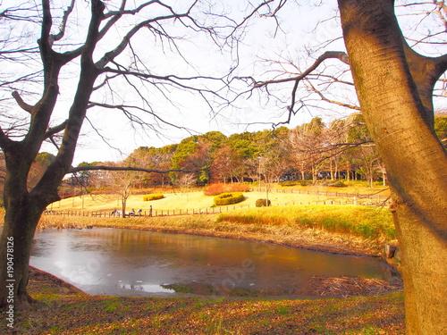 Foto op Plexiglas Zwavel geel The scenery of the park, January, Chiba, Japan