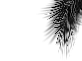 palm leaf shadow on empty white wall background, black and white