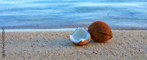 Coconut on caribbean beach. - 190510549