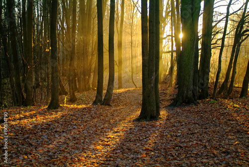 Foto op Canvas Herfst sunlight through the trees in the autumn