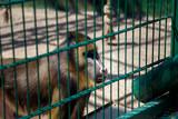 Monkey in the zoo - 190517176