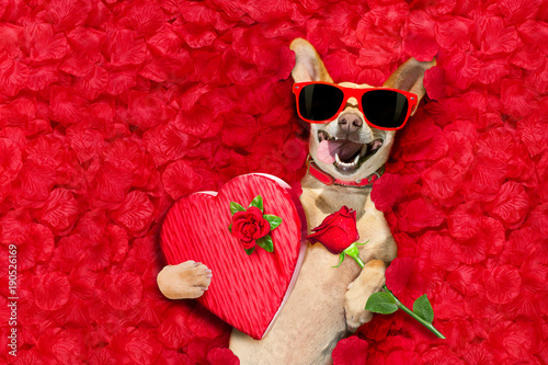 Tuinposter Crazy dog valentines dog with rose petals