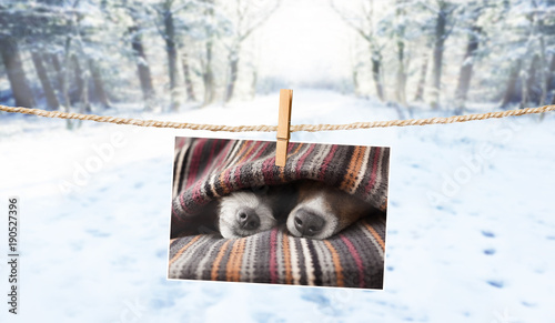 Papiers peints Chien de Crazy cute photo of dogs on string in winter
