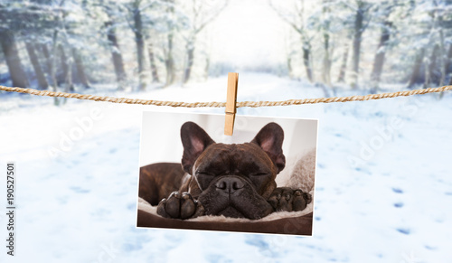 Papiers peints Chien de Crazy cute photo of dog on string in winter