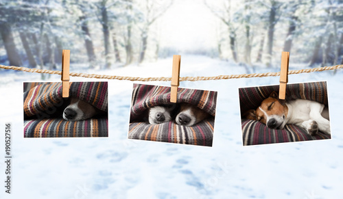 Papiers peints Chien de Crazy cute photos of dogs on string in winter