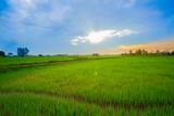 Field, Dawn, Dusk, Land, Meadow - 190528333