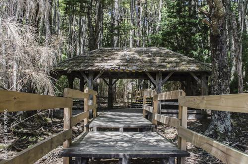 Tuinposter Weg in bos paisajismo, sur argentino #5