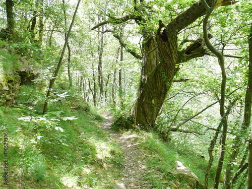 Fotobehang Weg in bos Baum