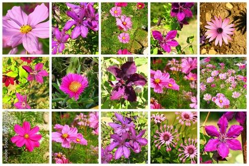 composition de fleurs mauves