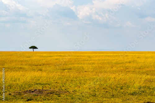 Foto op Aluminium Honing View of the savannah in Maasai Mara Park Kenya