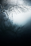 Magische Spiegelung eines Baumes im Winter im Wasser - 190537190