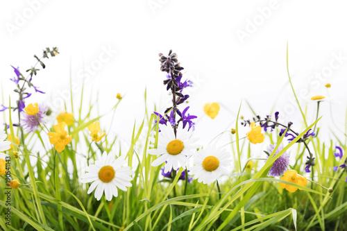 Wiosny łąka przed białym tłem