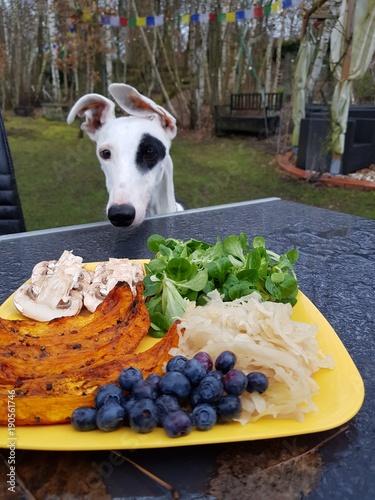 Tuinposter Kruidenierswinkel Essen mit Hund im Garten