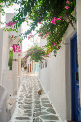 Traditional greek village. Streets and houses