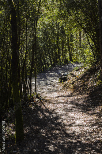 Fotobehang Weg in bos sendeo del bosque