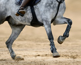 Close up image of legs of horse on show jumping competition. - 190567749