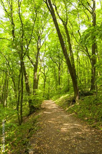 Aluminium Lime groen beautiful green forest