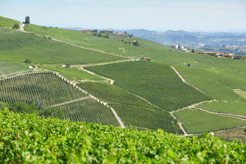Vineyards on Langhe hills in a sunny day in Piedmont, Italy