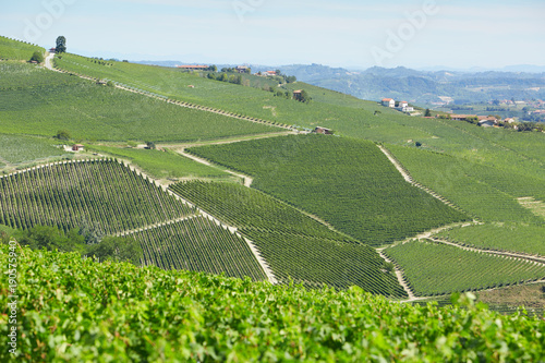 Foto op Canvas Pistache Vineyards on Langhe hills in a sunny day in Piedmont, Italy