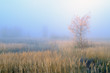 Misty morning in autumn in the field.
