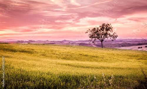 Papiers peints Miel Lonely tree at sunset