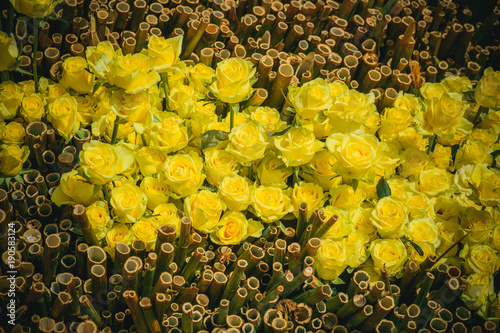 Bamboo and rose flowers with yellow petals on natural background