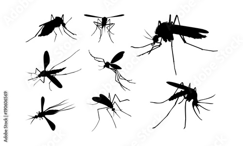 Set of Mosquito Silhouette vector illustration, Close Up Mosquito Silhouette - 190606569