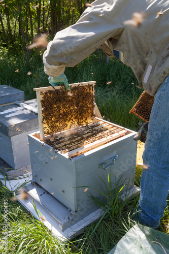Aluminium Bee Apiculture - visite sanitaire du rucher d'un apiculteur