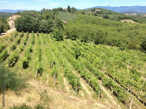 Foto op Canvas Pistache The stunning view across the valley of vineyards in Monterchi in Tuscany Italy from the mountain top and medieval farm buildings on holiday on a hot Summer day in bright sunshine
