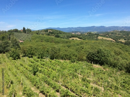 Foto op Canvas Pistache Landscape view across vineyards in Fonaco near Monterchi in Tuscany Italy showing stunning natural beauty of the lush green valley on a scorching hot Summer day